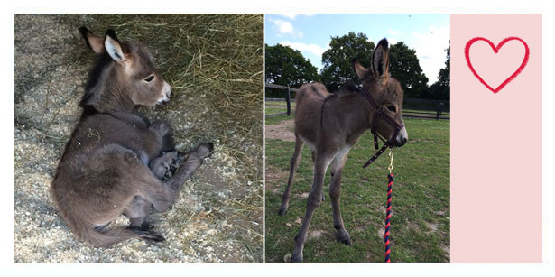 Donkey Care Home - Colchester, Essex